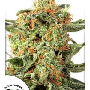 andinotech-marihuana-orange-hill-special