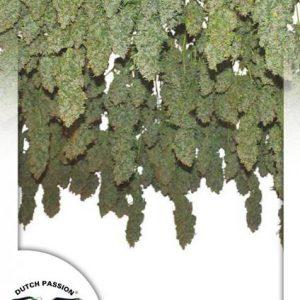 andinotech-marihuana-power-plant