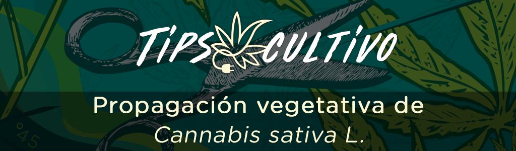 Propagación vegetativa de Cannabis sativa L.