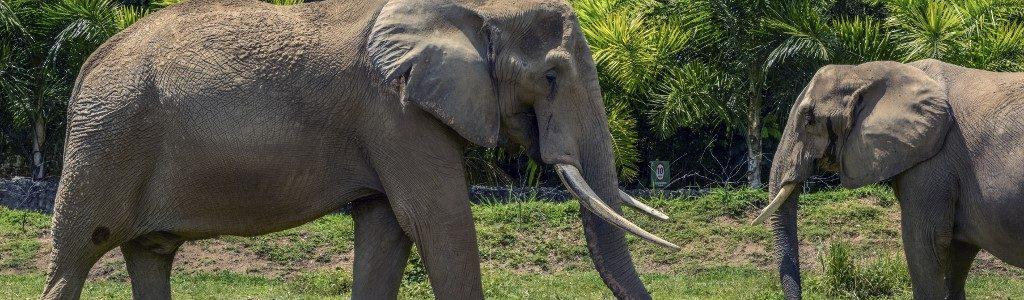 Elefantes polacos serán tratados con Cannabis