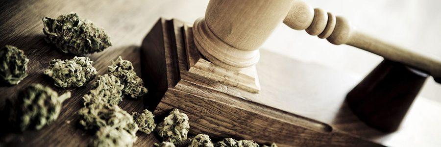 Continúan casos de criminalización a cultivadores de Cannabis